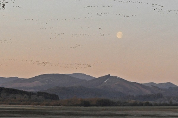 A Walk Through Time: Geological Story of the Willamette Valley National Wildlife Refuges