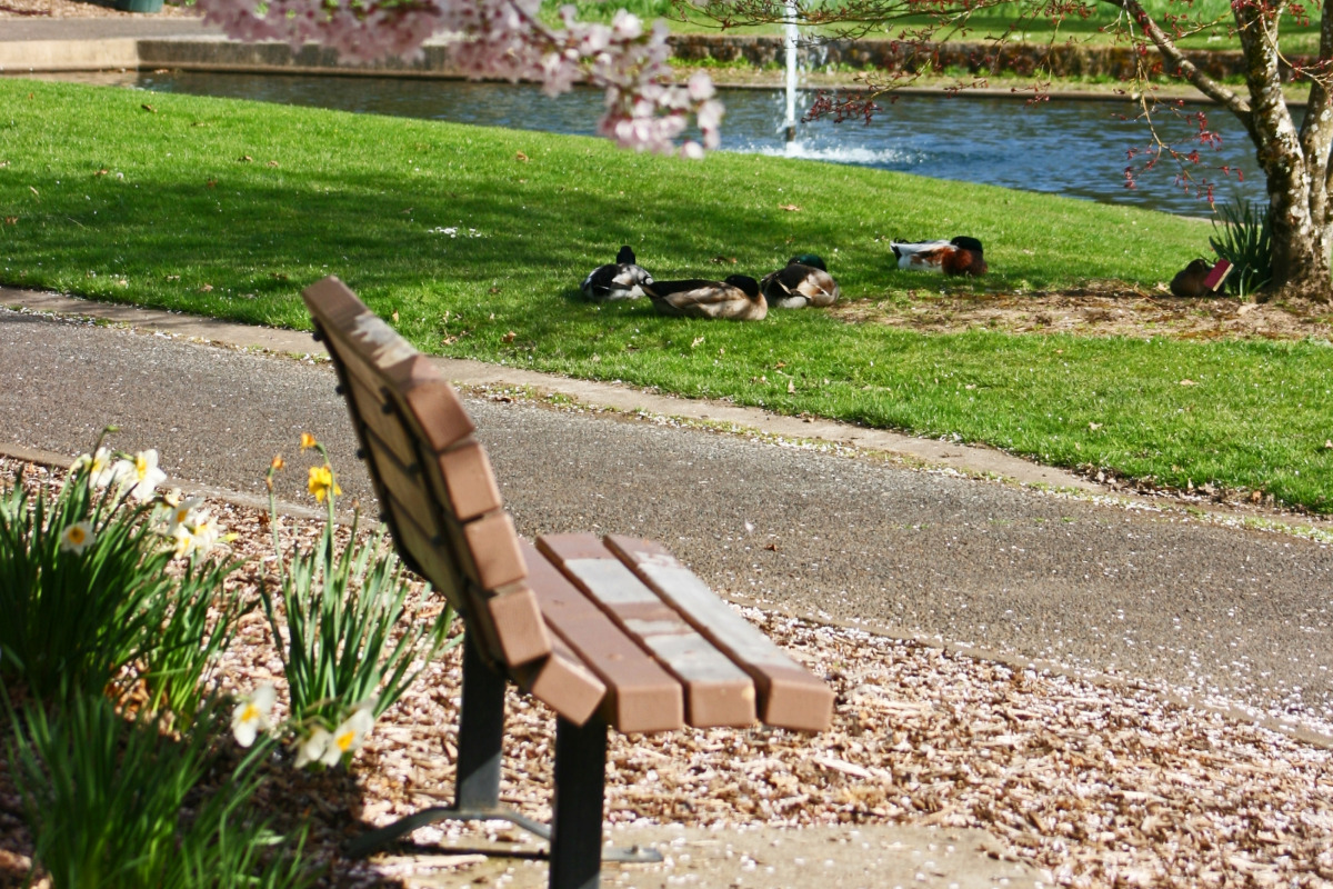 Starker Arts Park - Spring in Corvallis, Oregon