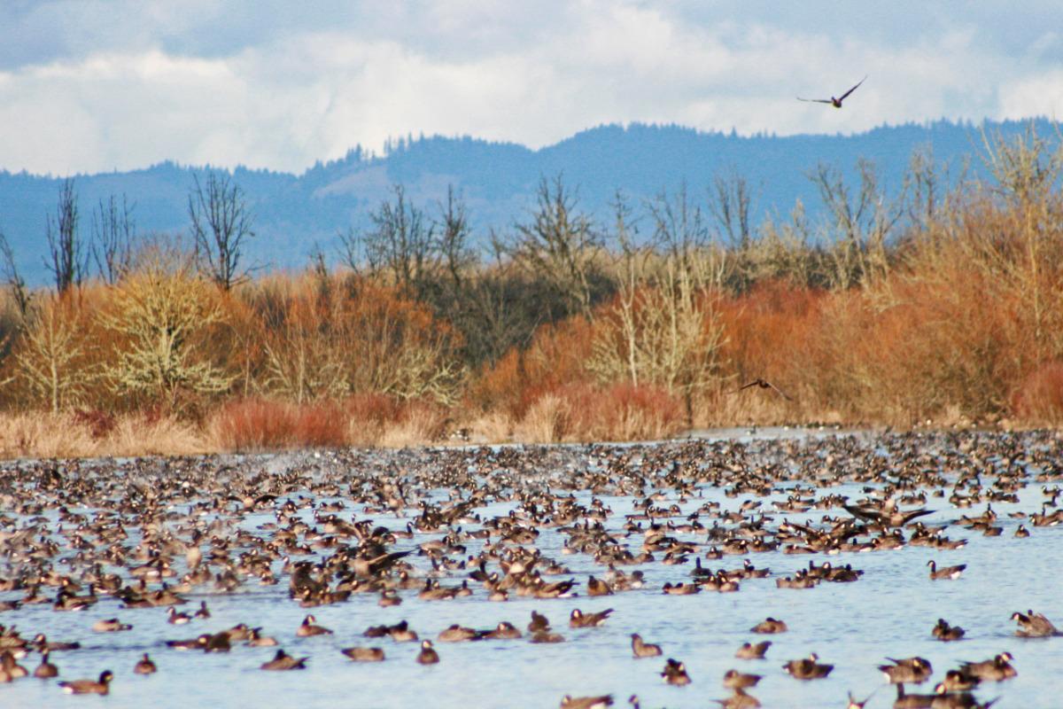 William L. Finley National Wildlife Center, near Corvallis, Oregon