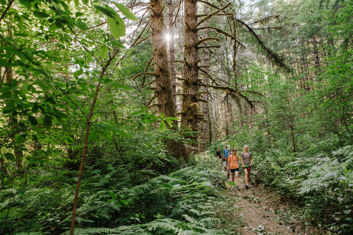 Alsea Falls, Alsea, Oregon - A group of family & friends hike through the woods on a fern-lined trail at the Alsea Falls Recreation Site.