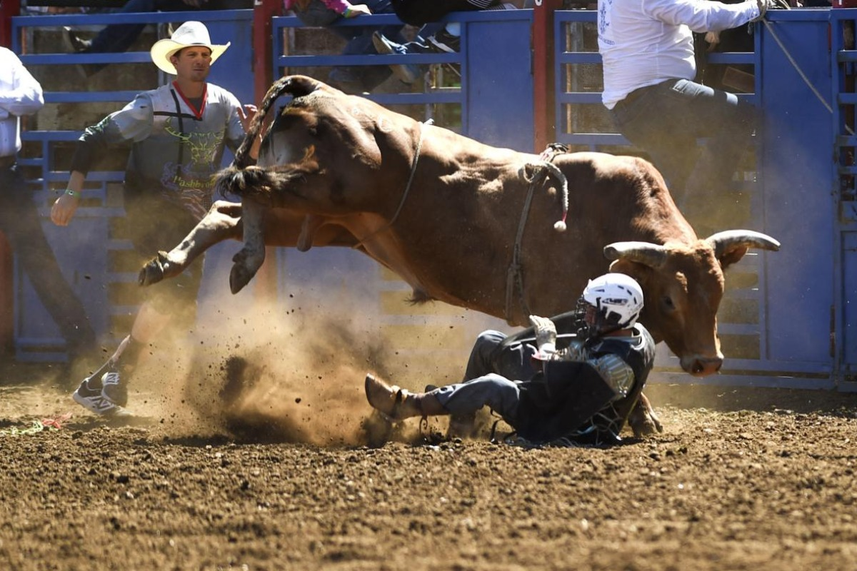 Bull Riding at Philomath Frolic & Rodeo