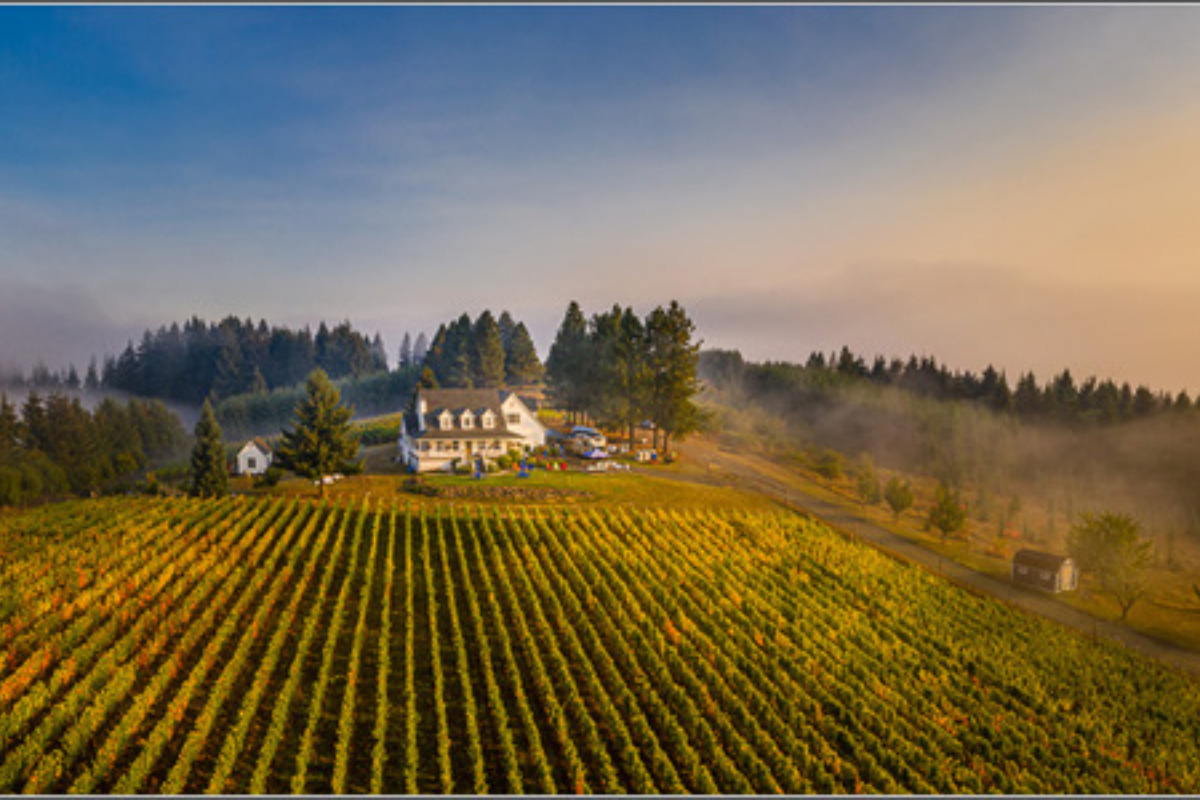 BlueBird Hill Farm, B&B and Cellars, Monroe, Oregon - Aerial photo of the vineyards and house at sunset