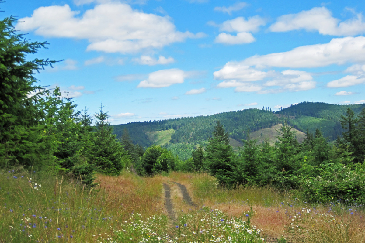 McDonald-Dunn Forest Views, by Lainey Morse - Looking out over a trail, with trees and grass in the foreground and hills and mountains in the background.