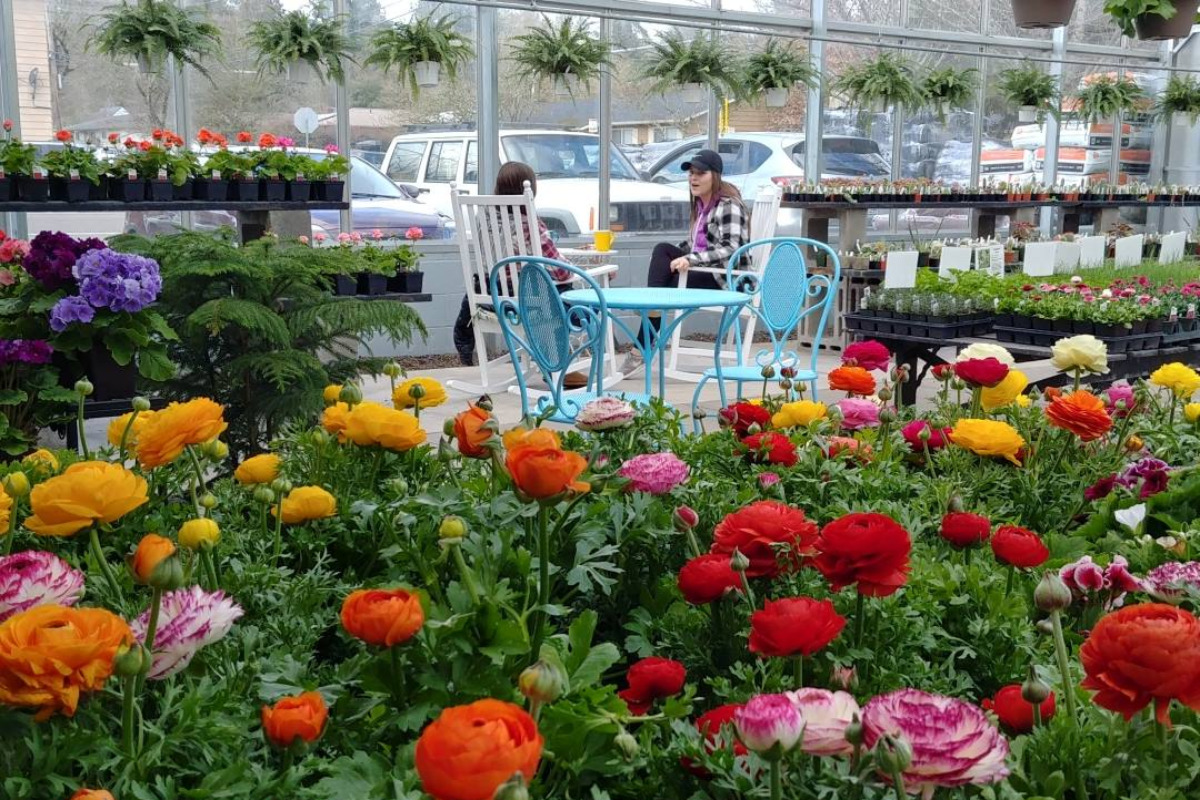 Susan's Garden & Coffee Shop, Corvallis, Oregon - Inside the store, showing rows of tables full of colorful flowers, as well as a cafe table where people are enjoying coffee - via Facebook