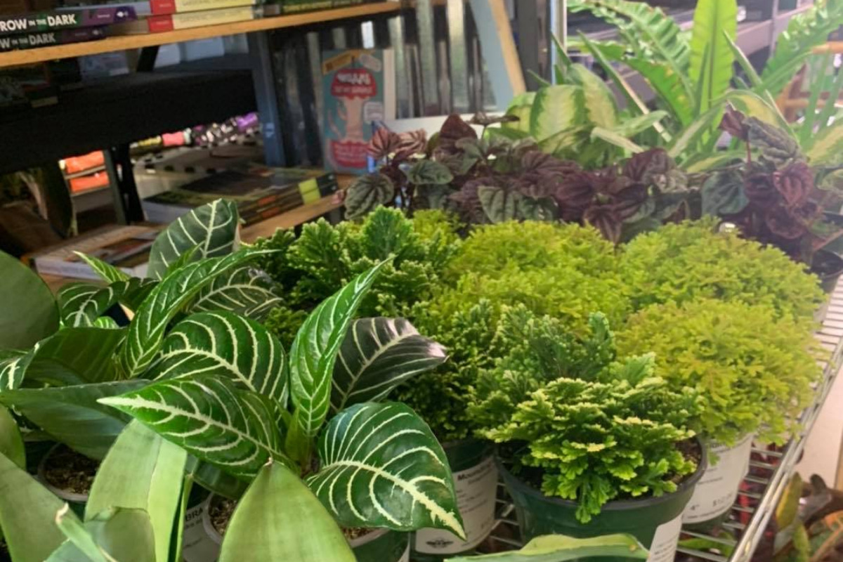Urban Ag Supply, Albany, Oregon - A display of potted plants inside the store - Image via Facebook