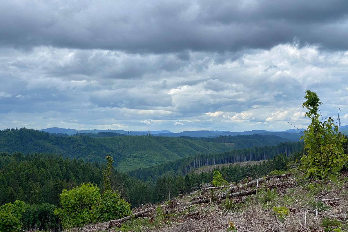 Views across the Coast Range mountains from the Corvallis to the Sea Trail, by Matthew Wastradowski.