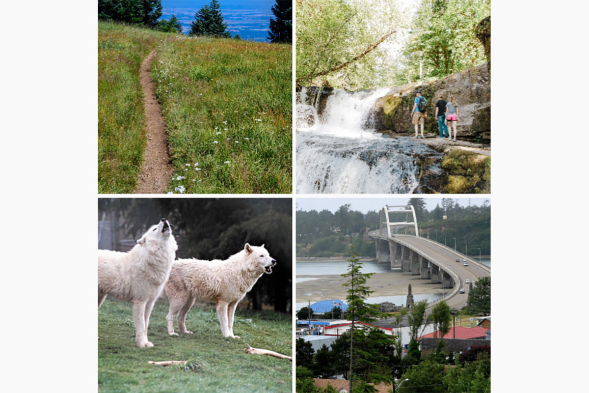 Marys Peak to Pacific Scenic Byway - Driving Tour App - Collage showing Marys Peak, Alsea Falls, Wolves, and the Newport Bridge