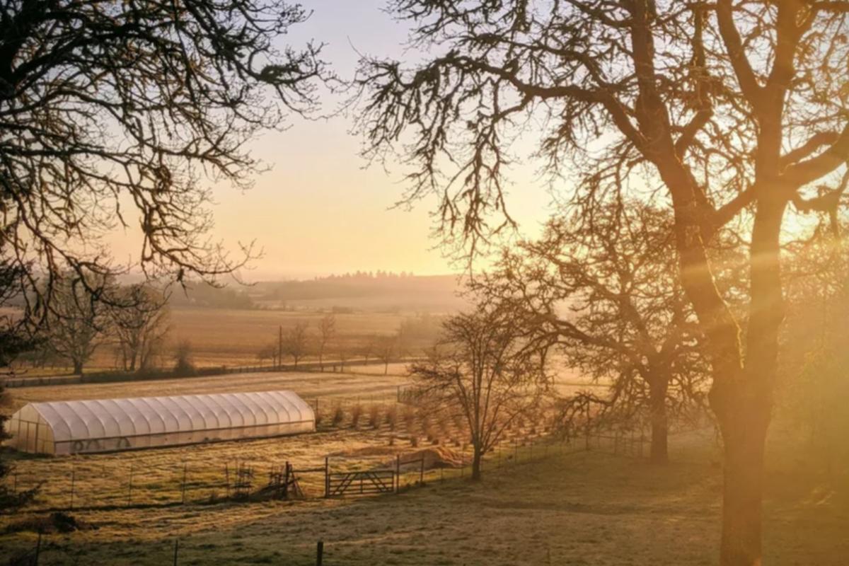 Hiatt Farm, Corvallis, Oregon - Farm fields and greenhouse at dawn, photo via website