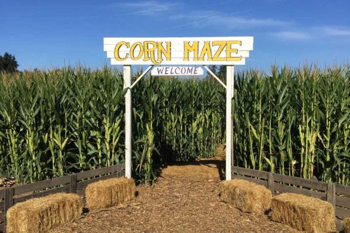 The entrance to the Corn maze at the Melon Shack in Corvallis, Oregon, via the Melon Shack's Facebook Page