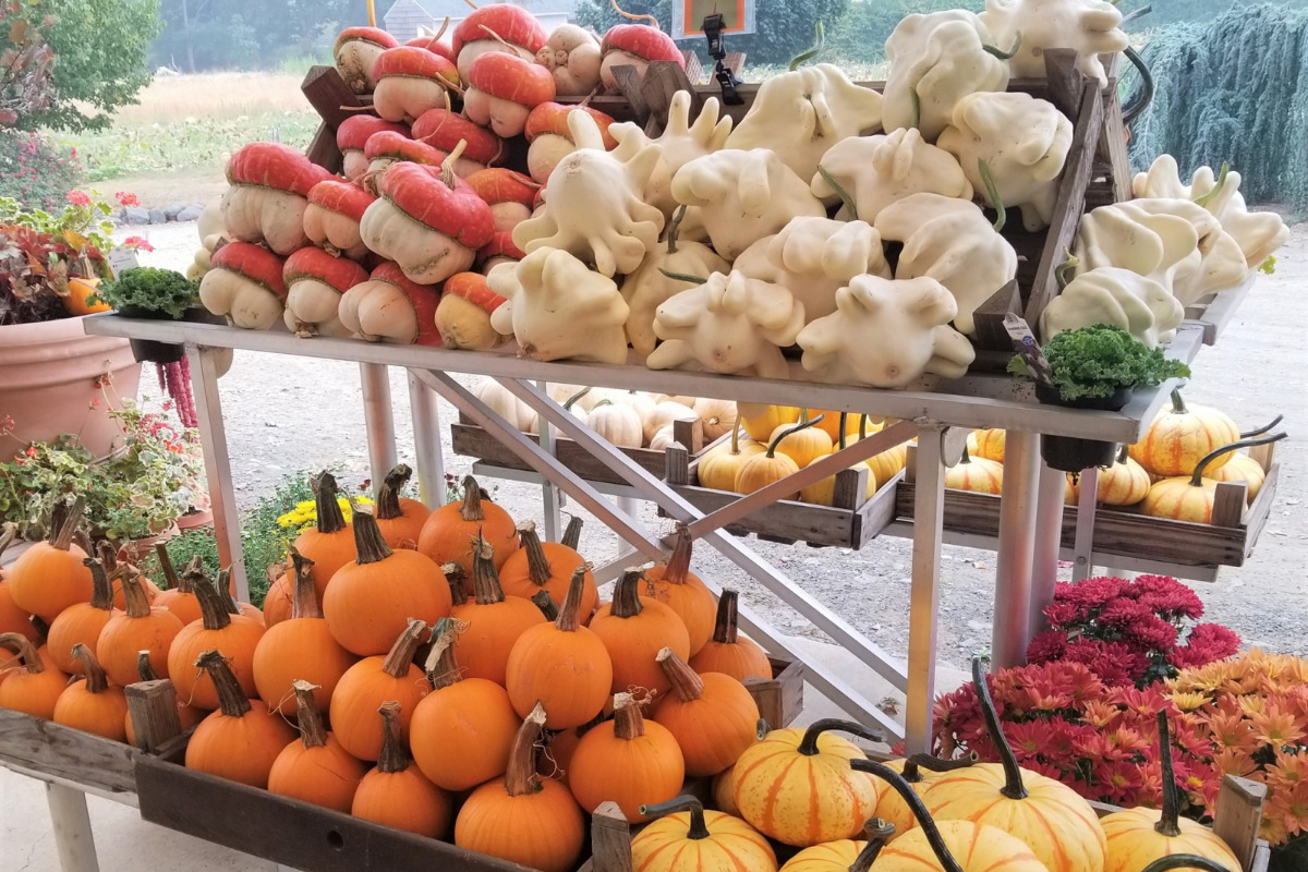 An outdoor display of just a few of the many varieties of pumpkins and gourds available at the Greengable Farm Pumpkin Patch in Philomath, Oregon. Photo via Greengable Facebook Page.