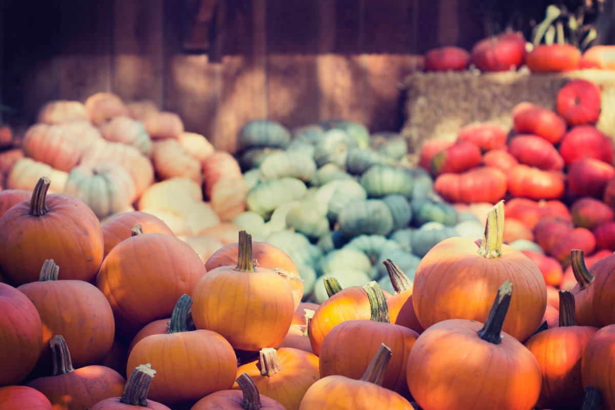 A display of various pumpkins and gourds outside a rustic barn, by Tim Mossholder, via Pexels