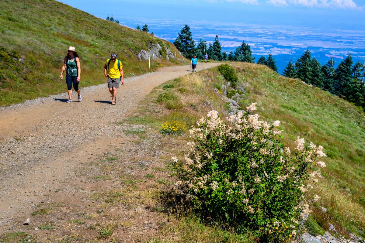 Marys Peak, Philomath, Oregon - Hikers explore the trails on Marys Peak, by Reed Lane Photography