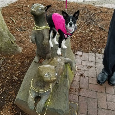 Aggie making otterly adorable friends in downtown Corvallis, Oregon - Riverfront Commemorative Park
