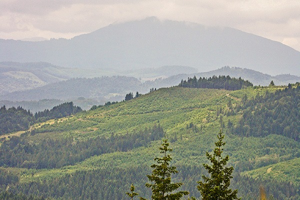Marys Peak near Corvallis, Oregon, by Lainey Morse