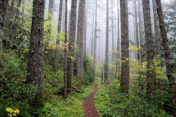Starker Lecture Series Will Explore The Future Of Forestry