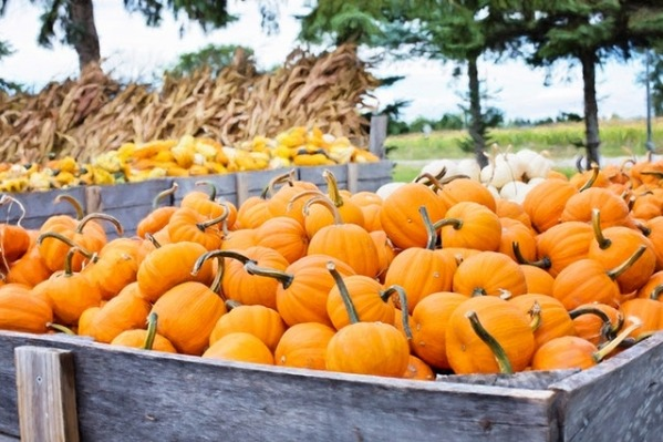 Davis Family Farm Hayrides & Pumpkin Patch