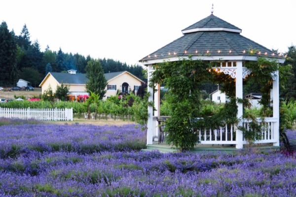 TeBri Vineyards and Lavender in Monroe, Oregon