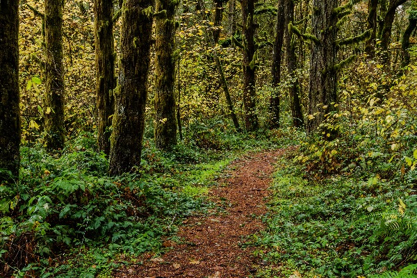 A trail in William L. Finley National Wildlife Refuge.