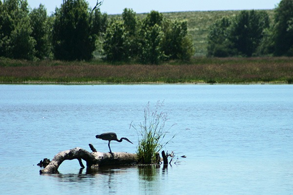 William L. Finley National Wildlife Refuge, near Corvallis, Oregon, by Lainey Morse
