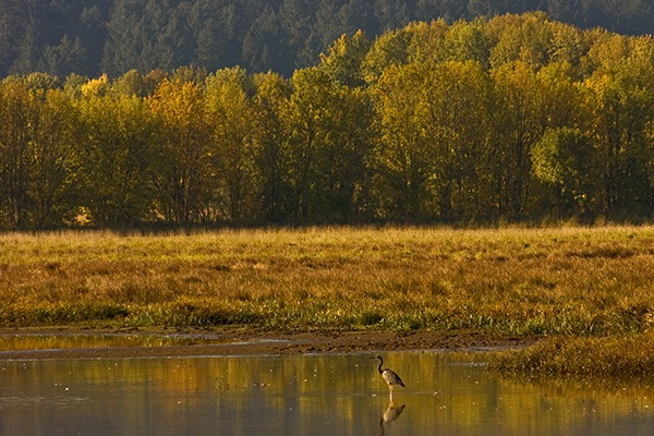 William L. FInley National Wildlife Refuge, near Corvallis, Oregon, by Lainey Morse